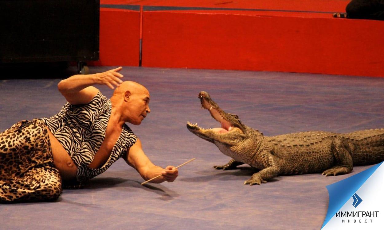В Венгрии, как и во многих странах, запрещено использовать животных в цирке, за исключением домашних