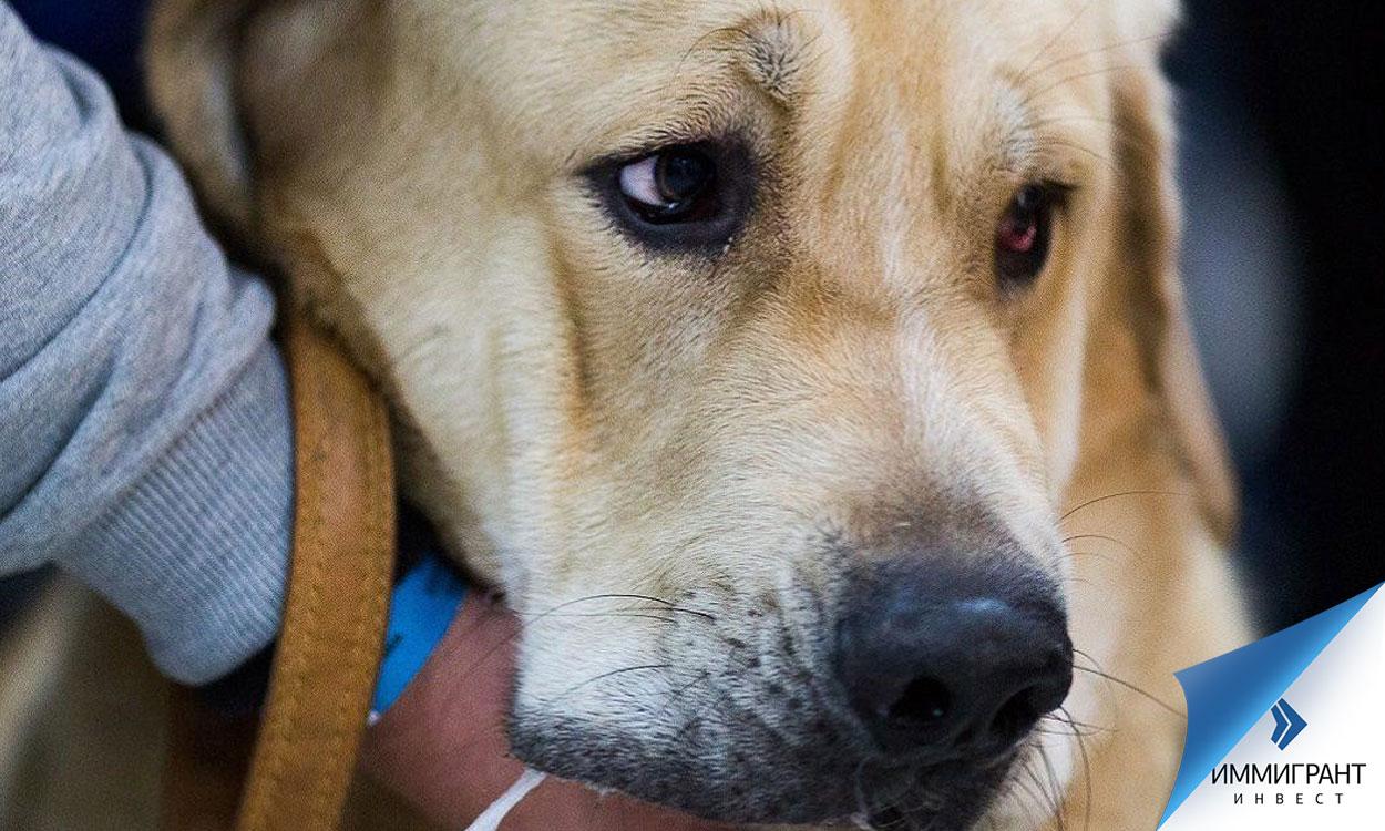 Санкции за нарушение правил содержания домашних животных в Венгрии – от штрафа до тюремного заключения
