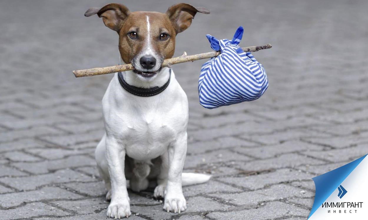 Если потерявшаяся собака или кошка имеет микрочип, шансы найти ее велики