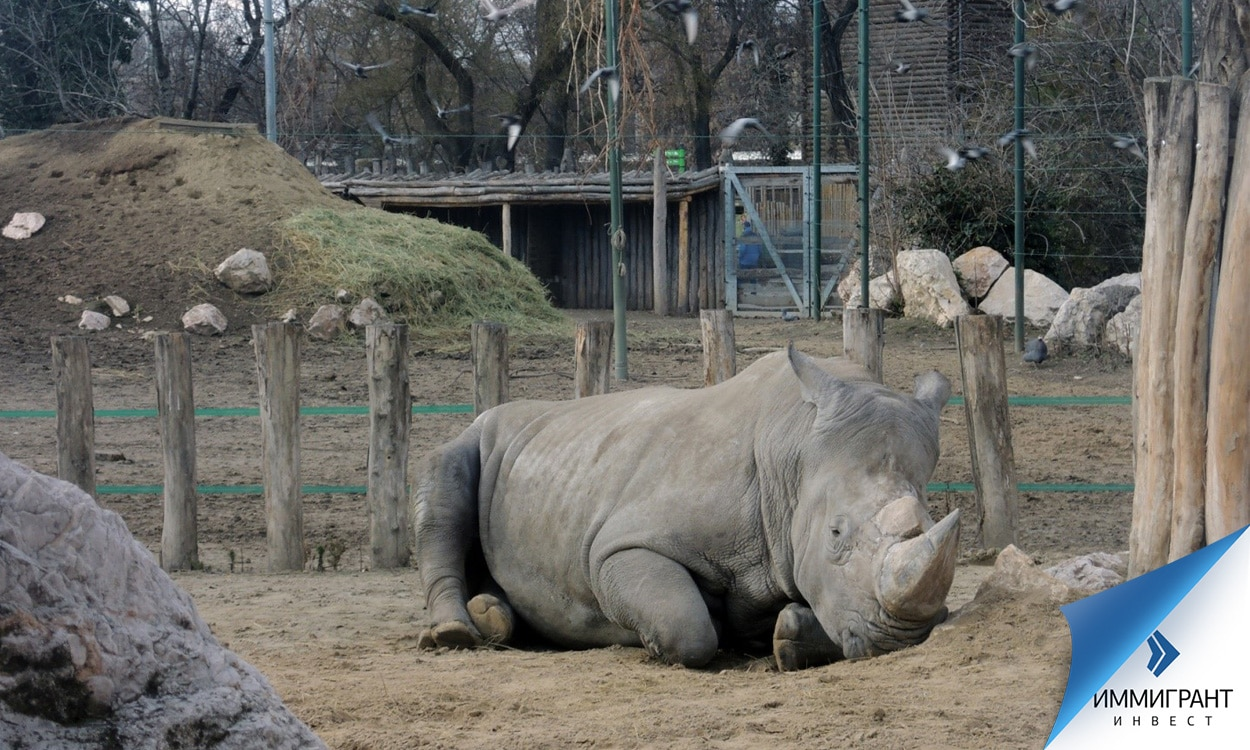 Если в качестве развлечения для детей в Венгрии вы выбрали зоопарк в Будапеште, не забудьте купить карту!